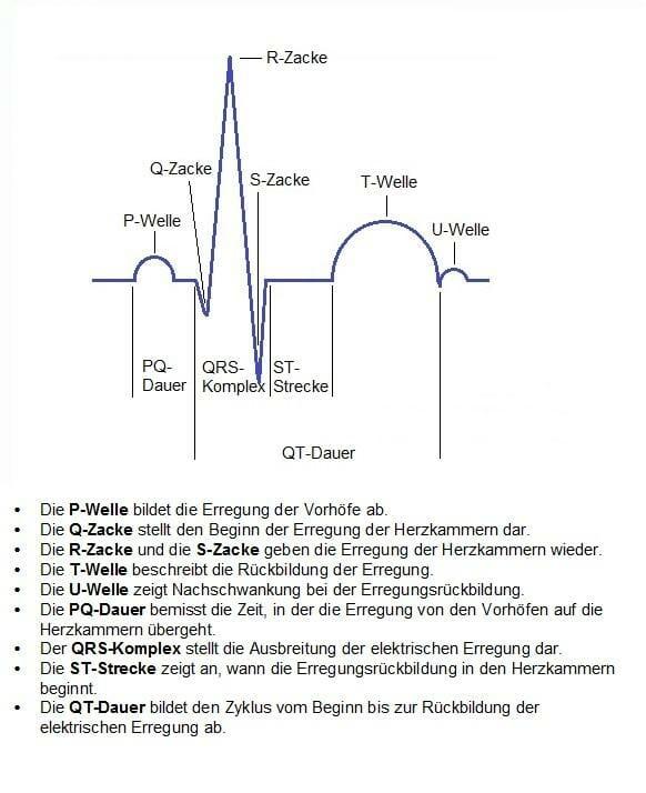 Einstellungstest Polizei - EKG