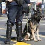 Polizei Bewerbung: Körperliche Voraussetzung der Polizei