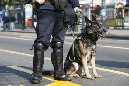Polizei Bewerbung Körperliche Voraussetzung Der Polizei Polizeitest